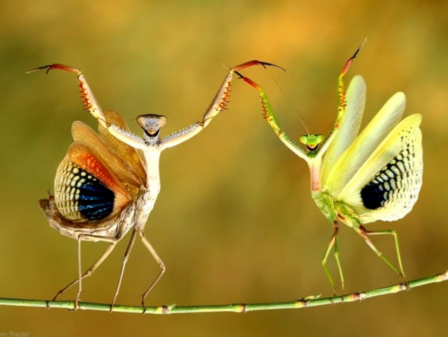 Mantid threat displays