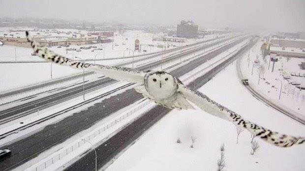 traffic camera in Montreal captured this image 620x349.jpg