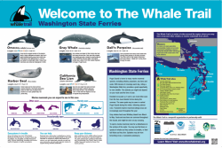 whale-trail-250x167.png